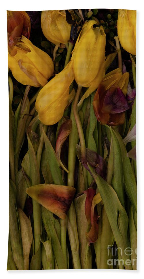 Tulips Beach Towel featuring the photograph Tulips Wilting by Jim Corwin