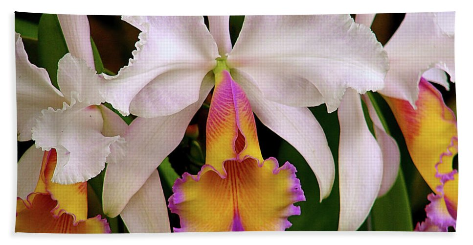 Flowers Beach Towel featuring the photograph 180 Degrees by Blair Wainman