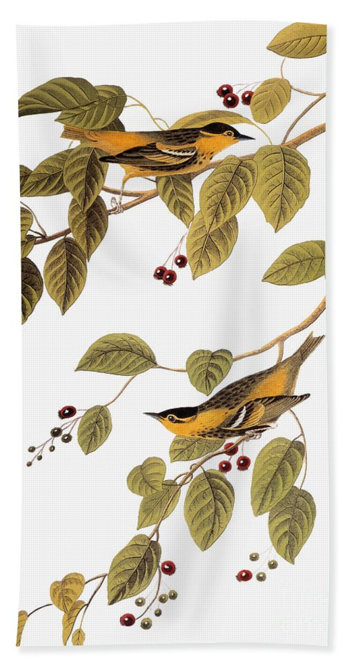 1838 Beach Towel featuring the photograph Audubon: Warbler by Granger