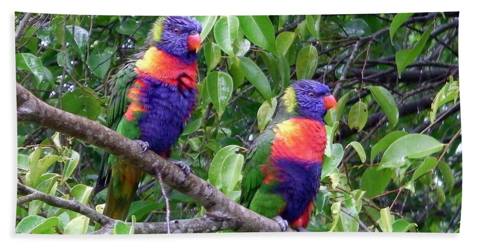 Australia Beach Towel featuring the photograph Australia - Two Brightly Coloured Lorikeets by Jeffrey Shaw
