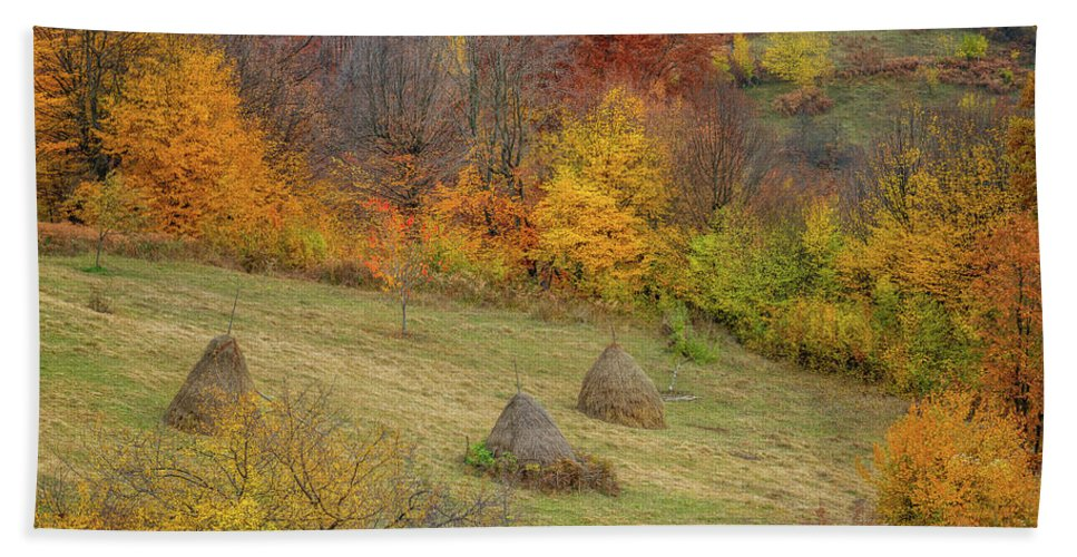 Landscape Beach Towel featuring the photograph Autumn Forest by Evgeni Ivanov