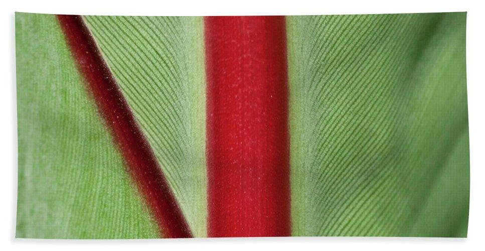 Leaf Beach Towel featuring the photograph Banana Leaf by Heiko Koehrer-Wagner