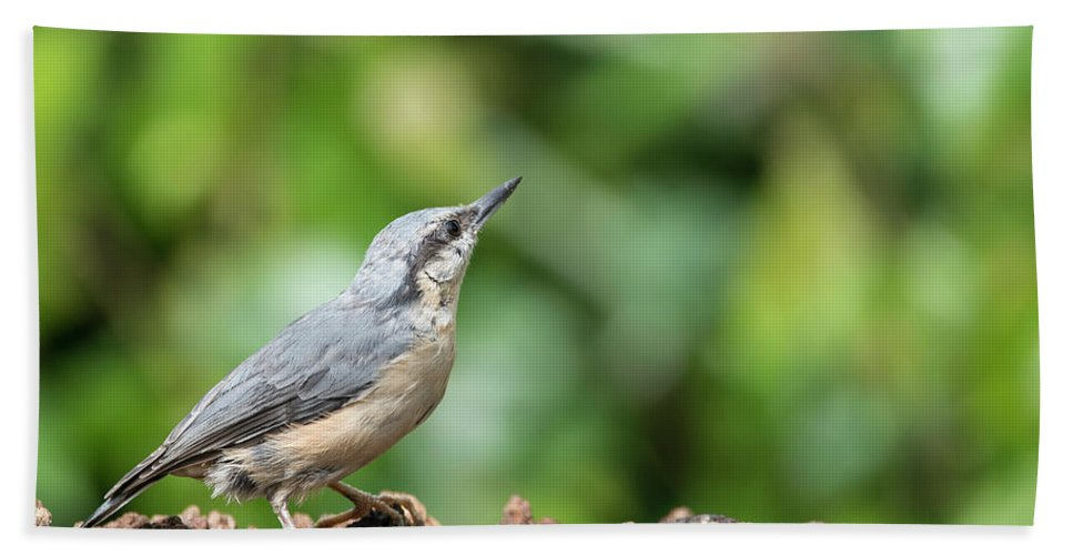 Nuthatch Beach Towel featuring the photograph Beautiful Nuthatch Bird Sitta Sittidae On Tree Stump In Forest L by Matthew Gibson