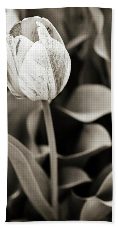 Tulip Beach Towel featuring the photograph Black And White Tulip by Marilyn Hunt