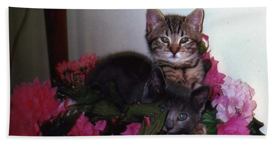 Cat Beach Towel featuring the photograph 2 Cats In The Flowers by Katherine Berlin