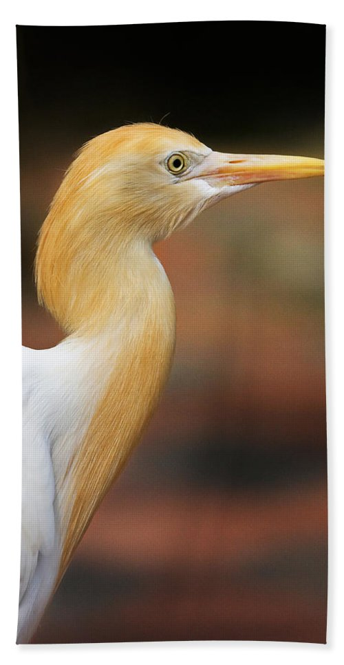 Bird Beach Towel featuring the photograph Cattle Egret by Louise Heusinkveld