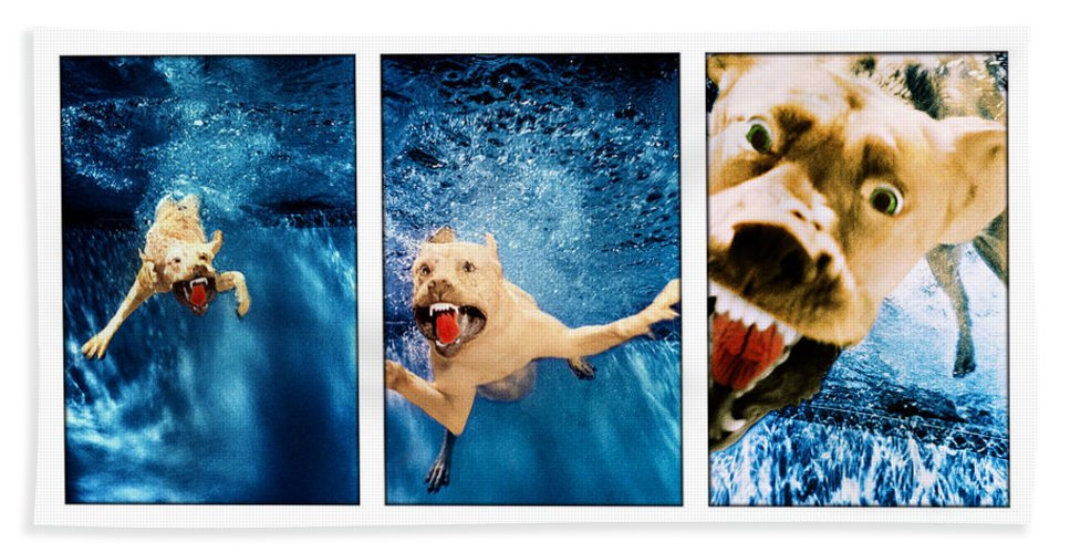 Dog Beach Towel featuring the photograph Dog Underwater Series by Jill Reger
