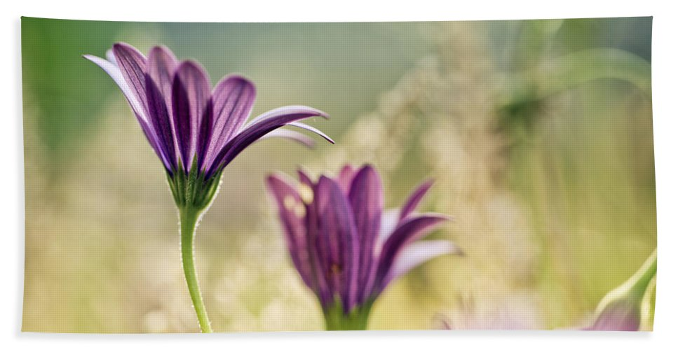 Flower Beach Towel featuring the photograph Flower On Summer Meadow by Nailia Schwarz