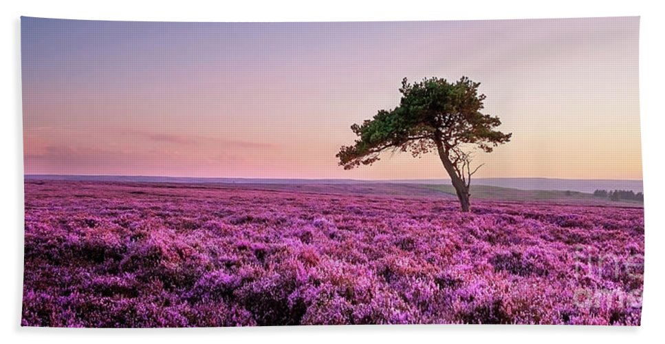 Lone Tree Beach Towel featuring the photograph Heather At Sunset by Janet Burdon