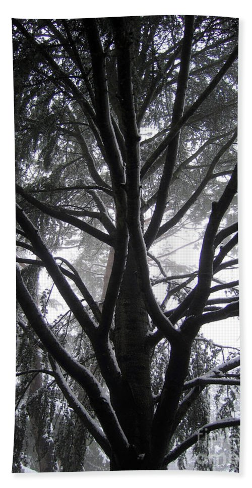 Albero Beach Towel featuring the photograph Home by Ilaria Andreucci