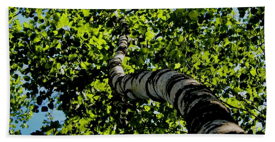 Tree Beach Towel featuring the photograph Looking Up by Modern Art