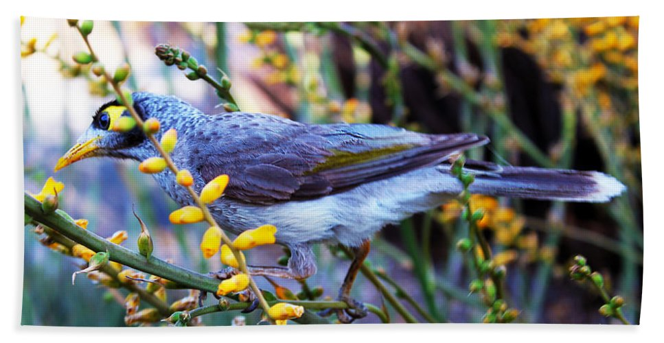 Mt. Cooth-tha Beach Towel featuring the photograph Noisy Miner In Oz by Susan Vineyard