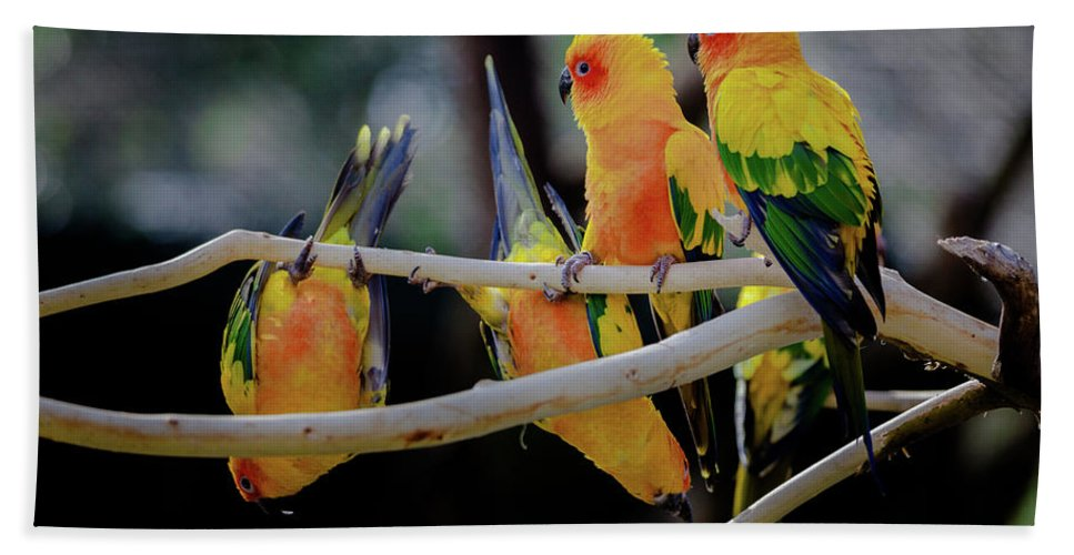 Parrot Beach Towel featuring the photograph Parrots by Hristo Shanov