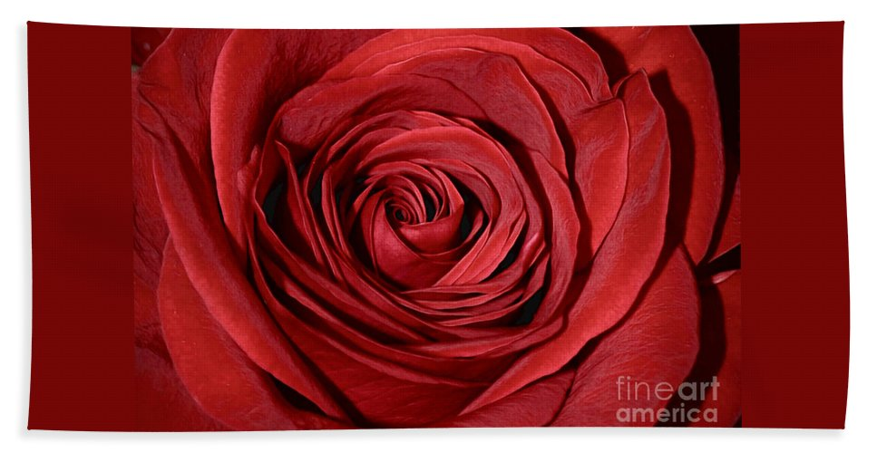 Red Beach Towel featuring the photograph Red Rose by Savannah Gibbs