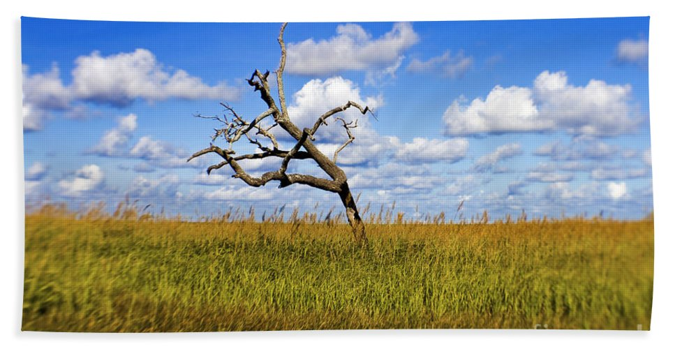 Tree Beach Towel featuring the photograph The Last One Standing by Scott Pellegrin