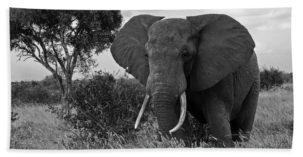 Africa Beach Towel featuring the photograph The Old Bull by Michele Burgess