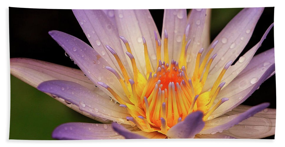 Naples Botanical Garden Beach Towel featuring the photograph Water Lily by Dennis Goodman
