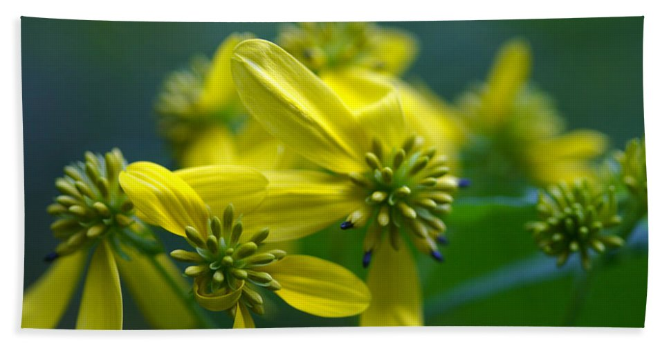 Background Beach Towel featuring the photograph Yellow Wingstem by Jack R Perry