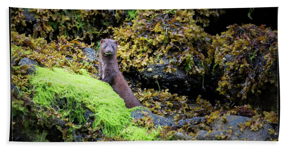 Mink Beach Towel featuring the photograph 27 by J and j Imagery