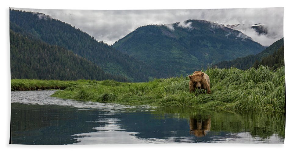 Grizzly Beach Towel featuring the photograph 29 by J and j Imagery