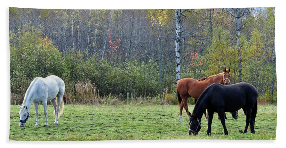 Horses Beach Towel featuring the photograph 3 Horses by Glenn Gordon