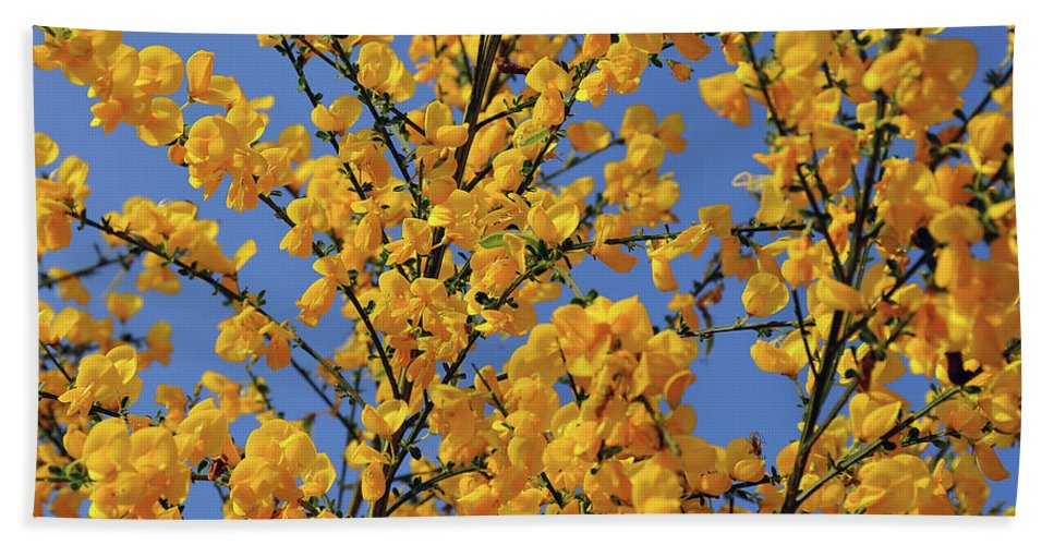 Ginestra Beach Towel featuring the photograph Ginestre by Ilaria Andreucci