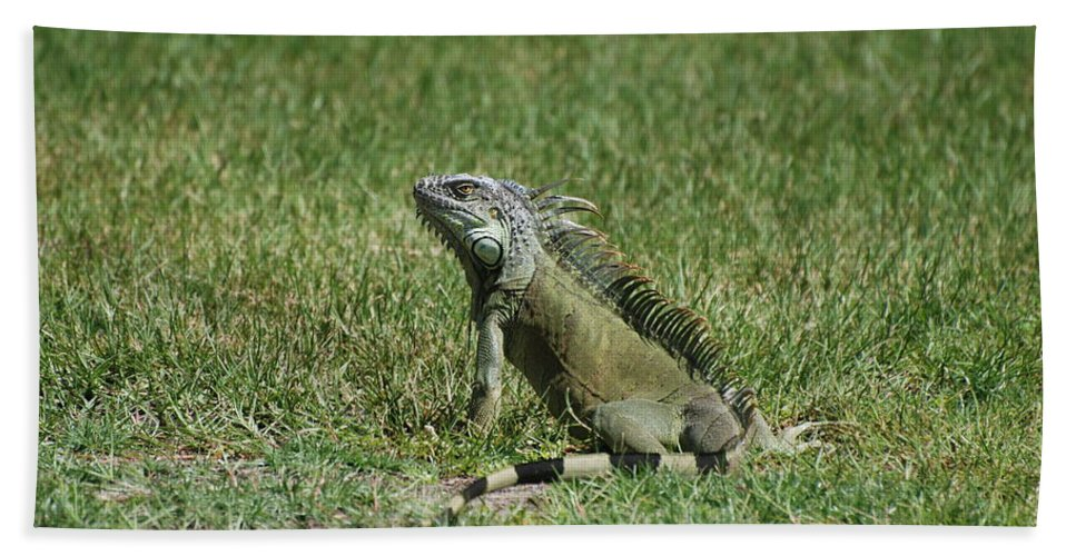 Macro Beach Towel featuring the photograph I Iguana by Rob Hans