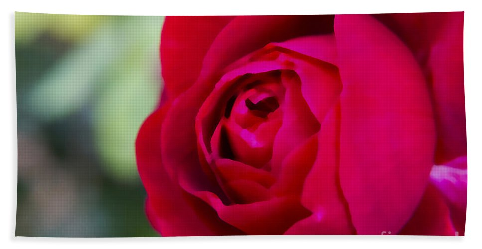 Flower Beach Towel featuring the photograph Red Rose by Sebastien Coell
