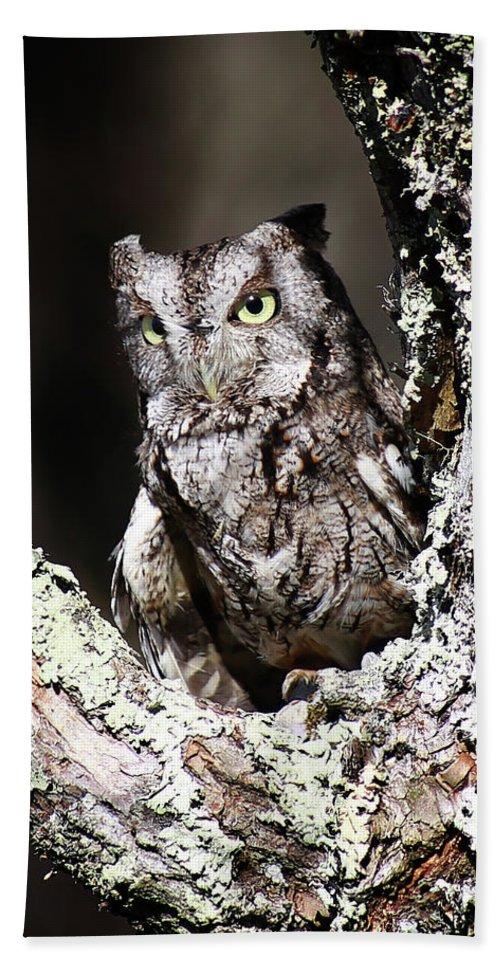 Screech Owl Beach Towel featuring the photograph Screech Owl by SC Shank