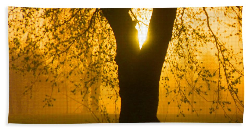 Sunrise Beach Towel featuring the photograph Sunrise Trees Fog by Donald Erickson