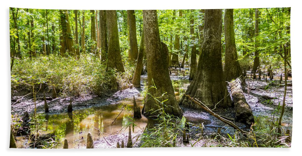 Carolina Beach Towel featuring the photograph cypress forest and swamp of Congaree National Park in South Caro by Alex Grichenko