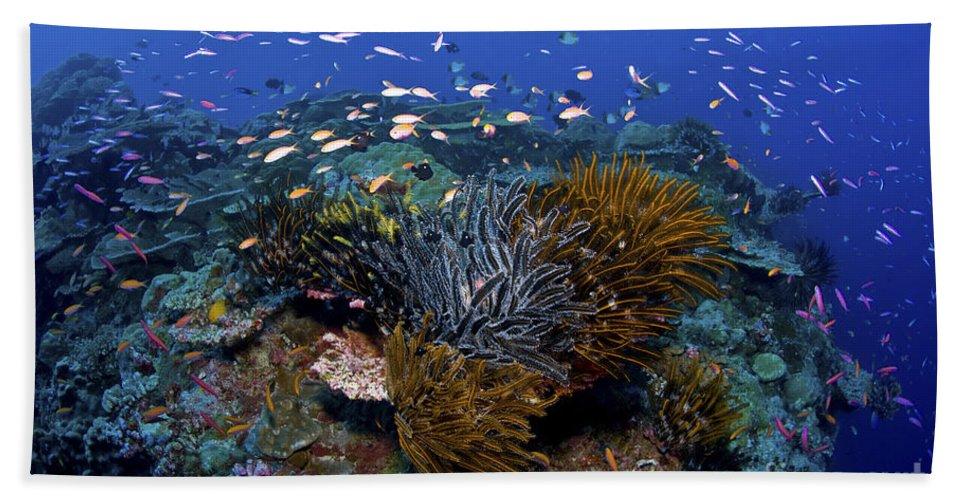 Crinoid Beach Towel featuring the photograph Colourful Reef Scene, Christmas Island by Mathieu Meur