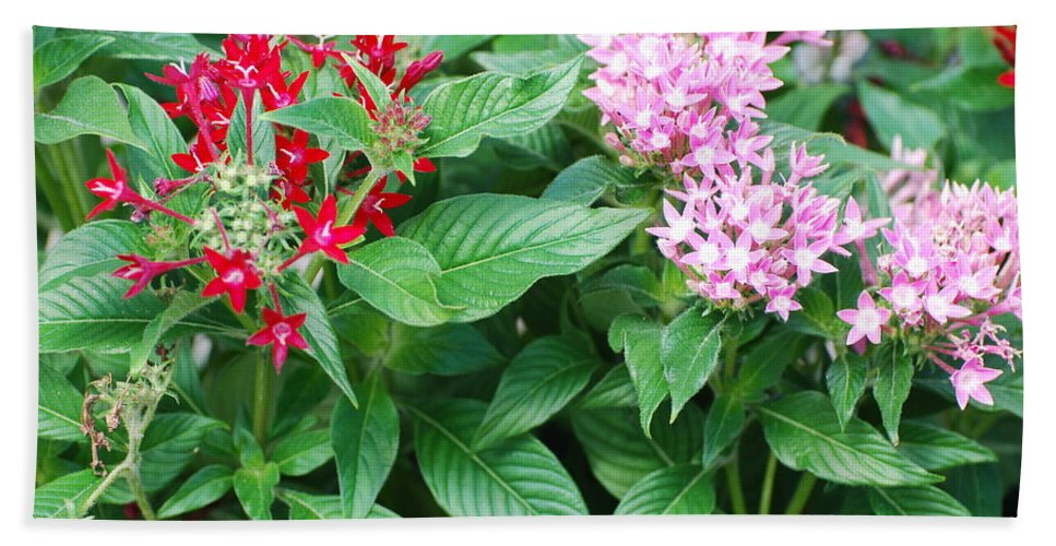 Flowers Beach Towel featuring the photograph Flowers by Rob Hans
