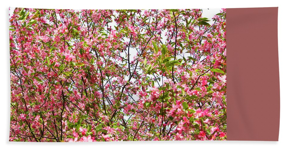 Cherry Beach Towel featuring the photograph Pink Cherry Tree by Irina Afonskaya