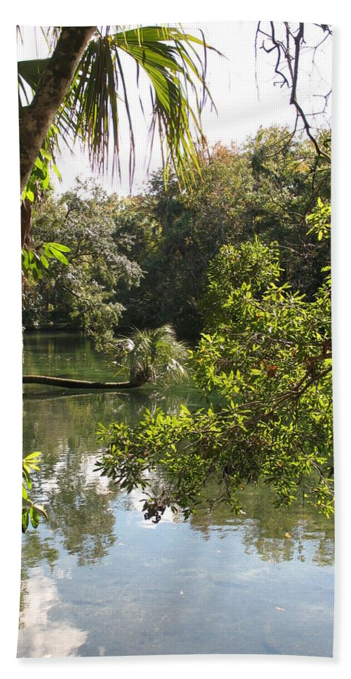Swamp Beach Towel featuring the photograph Swamp Reflection by Christiane Schulze Art And Photography