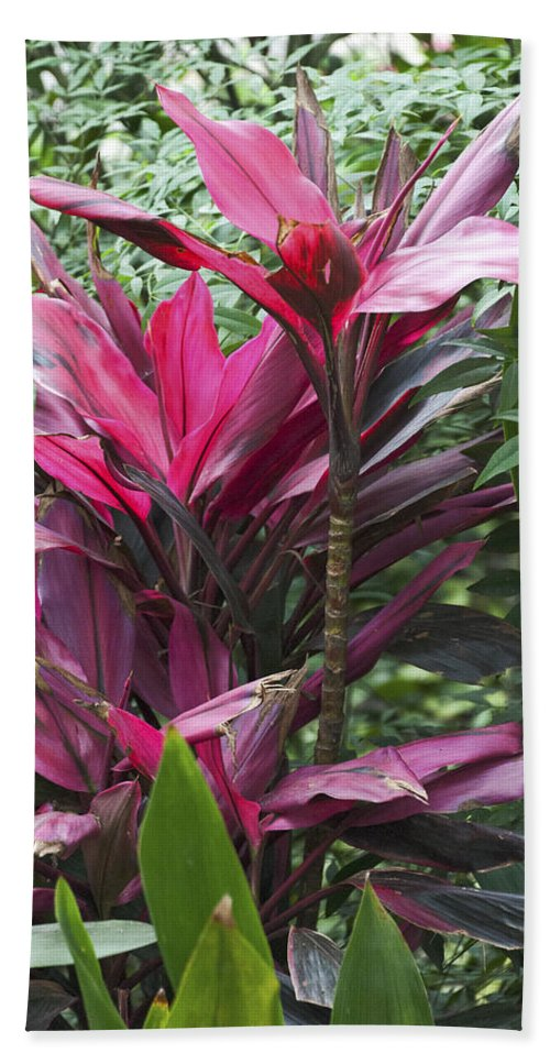 Asia Beach Towel featuring the photograph 4339- Flower by David Lange