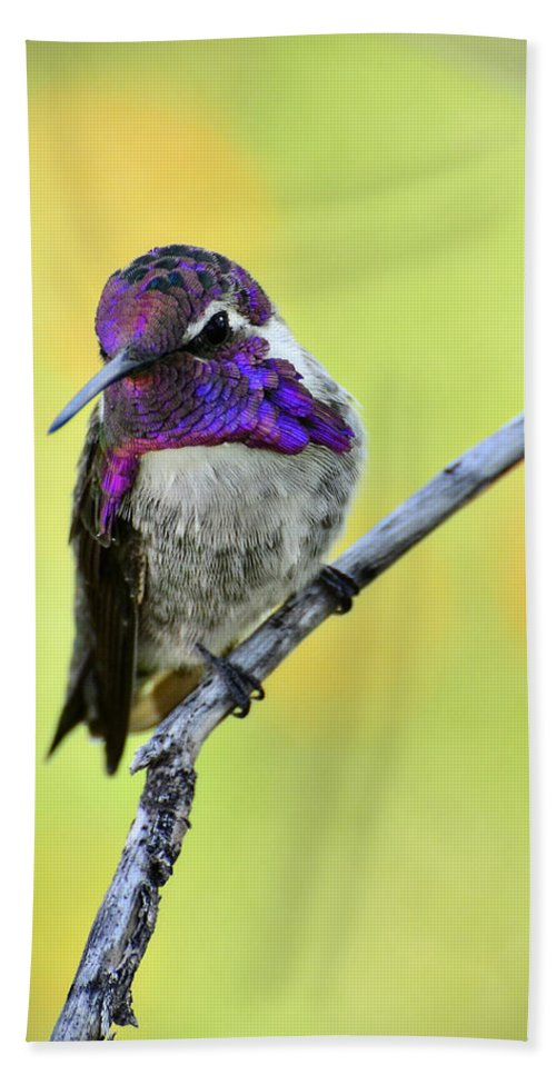 Costas Hummingbird Beach Towel featuring the photograph Costas Hummingbird by Saija Lehtonen