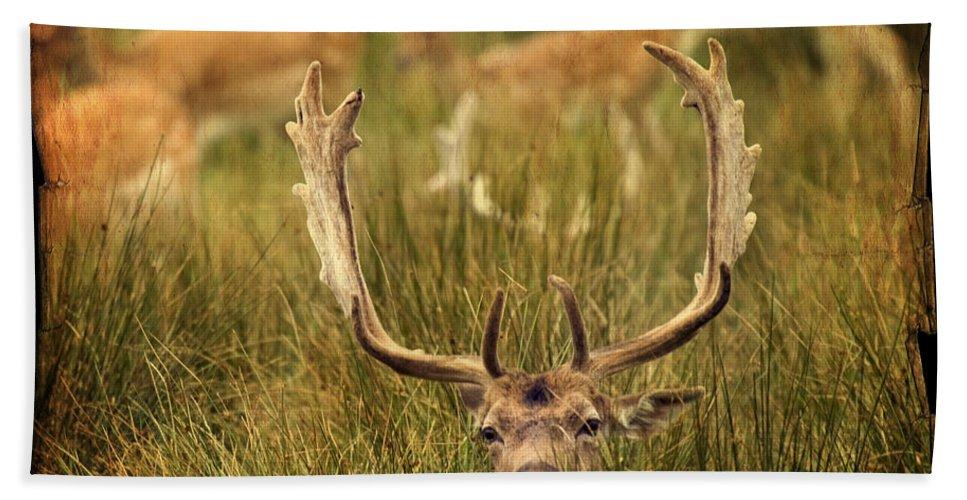 Fallow Deer Beach Towel featuring the photograph Fallow Deer by Angel Tarantella
