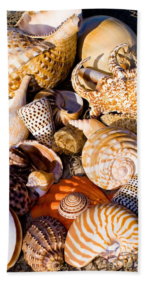 Seashells Beach Towel featuring the photograph Mix Group Of Seashells by Anthony Totah
