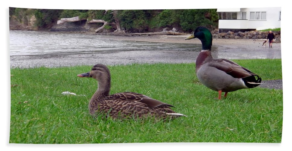 New Zealand Beach Towel featuring the photograph New Zealand - Mallard Ducks On The Grass by Jeffrey Shaw