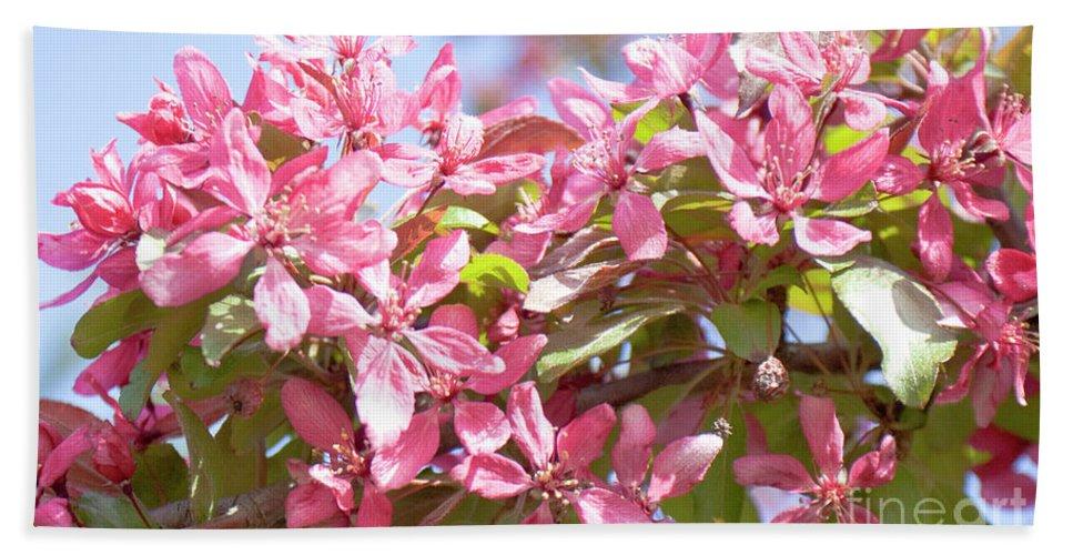 Pink Beach Towel featuring the photograph Pink Cherry Flowers by Irina Afonskaya