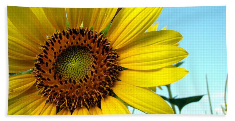 Sunflowers Beach Sheet featuring the photograph Sunflower Series by Amanda Barcon