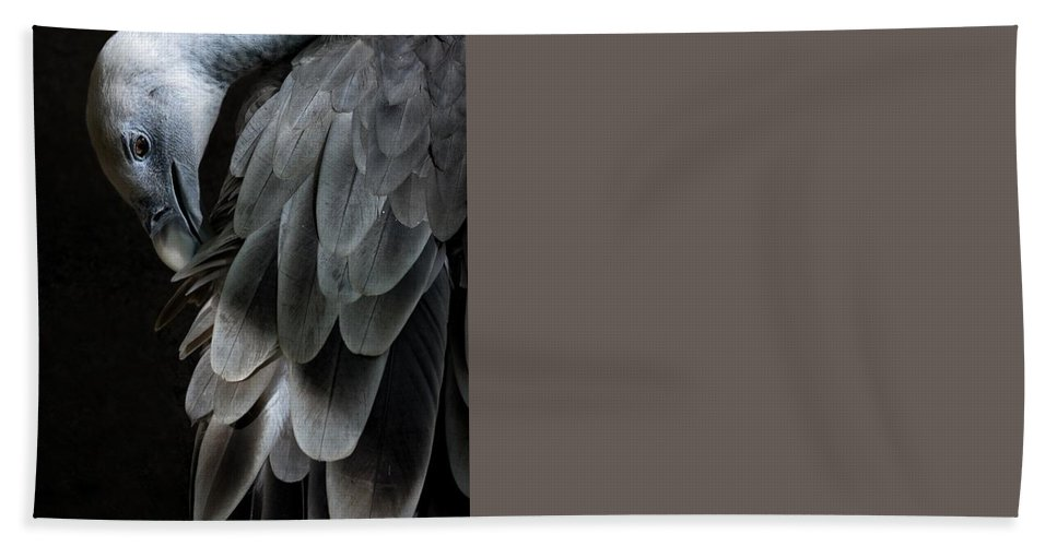 Vulture Beach Towel featuring the photograph Vulture by FL collection