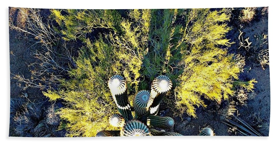Cactus Beach Towel featuring the photograph Cactus Saguaro by Steve Winden