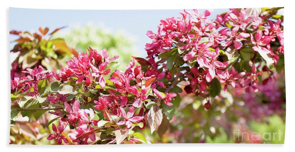 Cherry Beach Towel featuring the photograph Pink Cherry Flowers by Irina Afonskaya