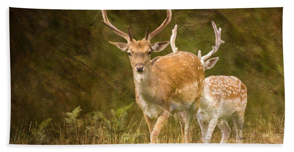 Fallow Deer Beach Towel featuring the photograph Fallow Deer by Angel Ciesniarska