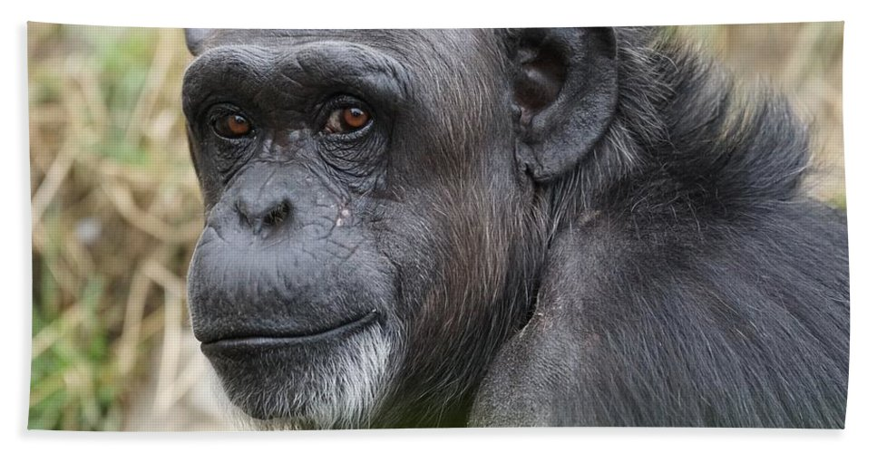 Monkey Beach Towel featuring the photograph Monkey by FL collection