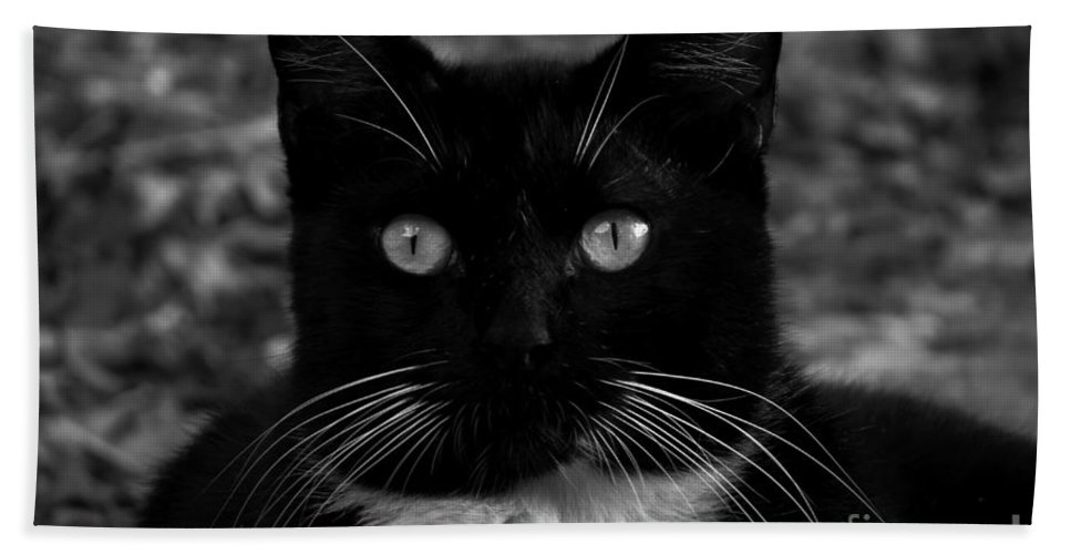 Adrian-deleon Beach Towel featuring the photograph A Black Cat's Life -florida by Adrian DeLeon