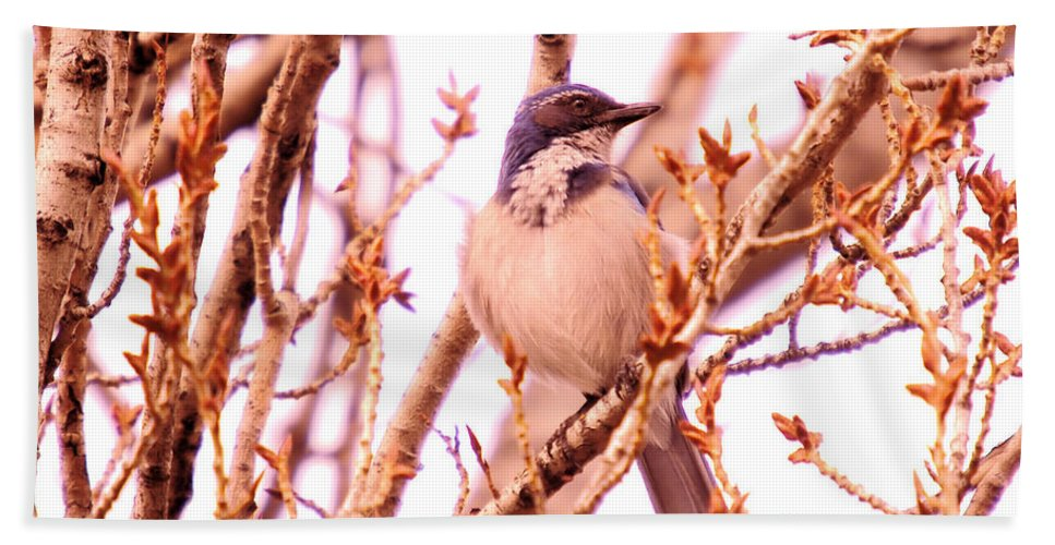 Blue Birds Beach Towel featuring the photograph Western Scrub Jay by Jeff Swan