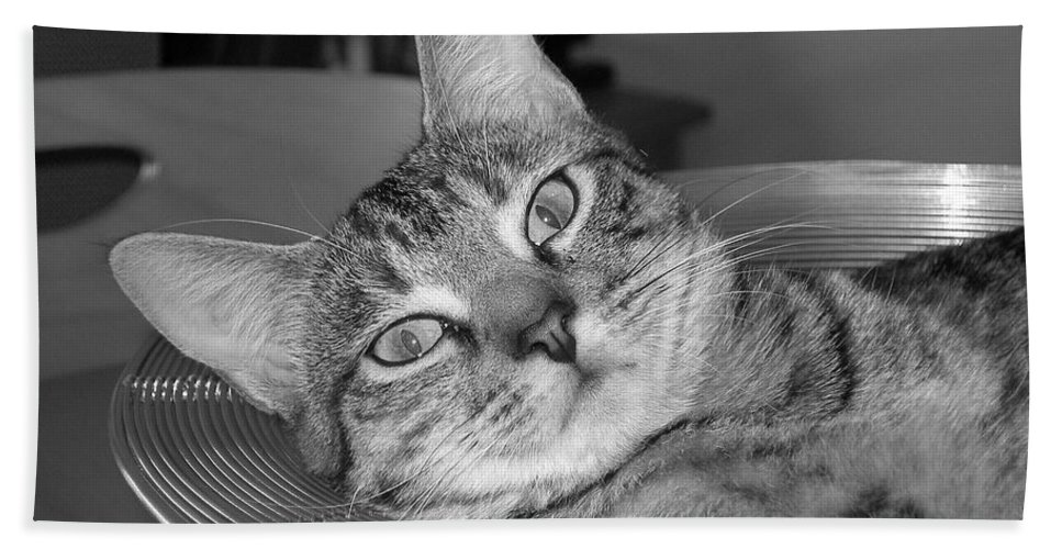 Cat Beach Towel featuring the photograph A Bowl Of Ginger by Maria Bonnier-Perez